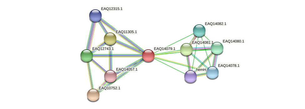RB2654_13439 protein (Maritimibacter alkaliphilus) - STRING interaction network