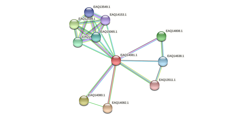 RB2654_13449 protein (Maritimibacter alkaliphilus) - STRING interaction network