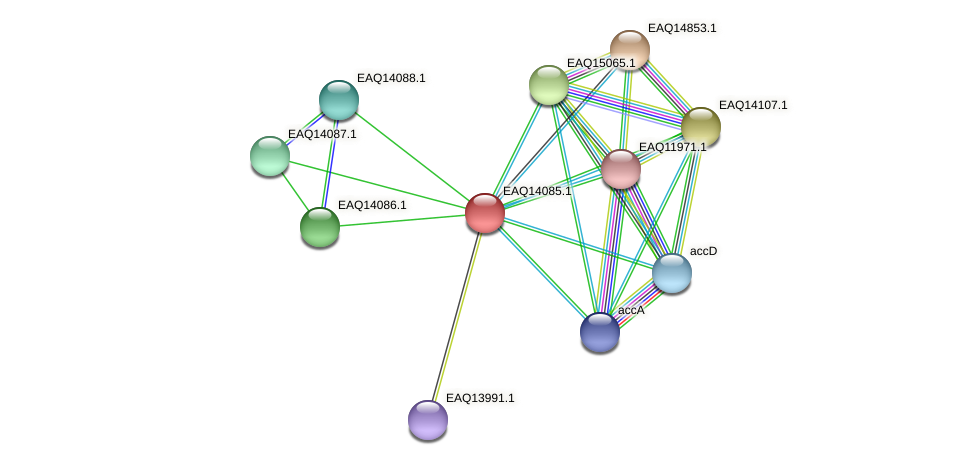 RB2654_13469 protein (Maritimibacter alkaliphilus) - STRING interaction network