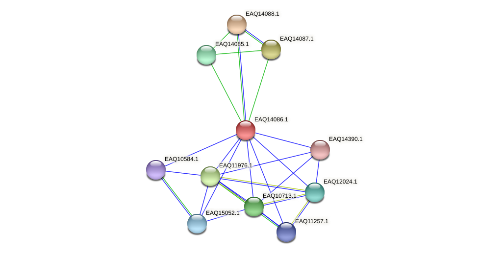 RB2654_13474 protein (Maritimibacter alkaliphilus) - STRING interaction network