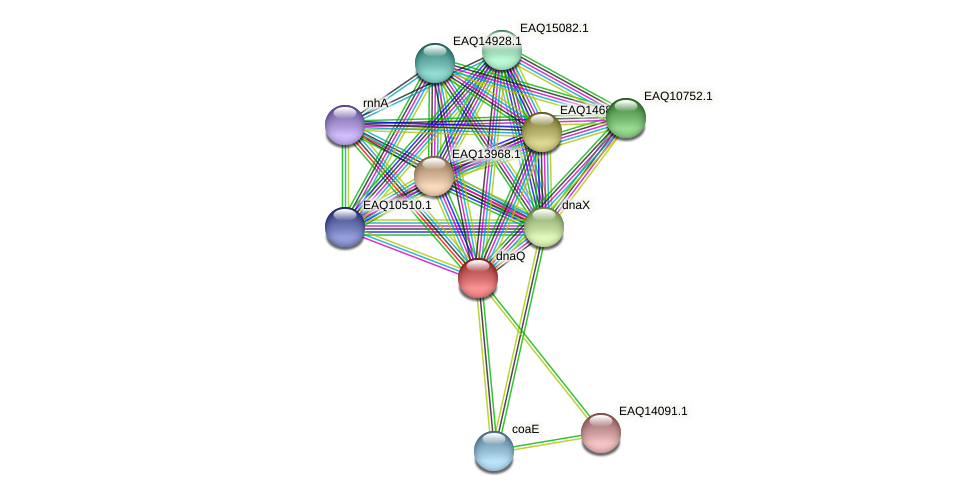 RB2654_13489 protein (Maritimibacter alkaliphilus) - STRING interaction network