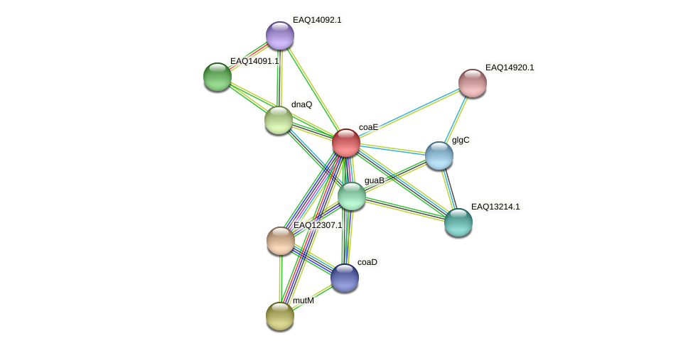 coaE protein (Maritimibacter alkaliphilus) - STRING interaction network