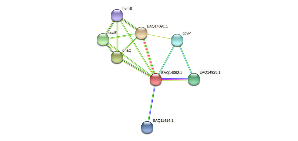 RB2654_13504 protein (Maritimibacter alkaliphilus) - STRING interaction network
