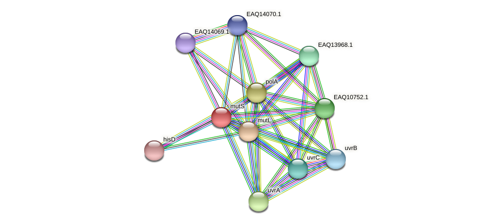 mutS protein (Maritimibacter alkaliphilus) - STRING interaction network