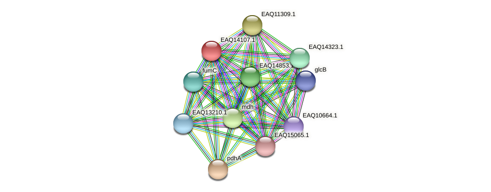 RB2654_13579 protein (Maritimibacter alkaliphilus) - STRING interaction network