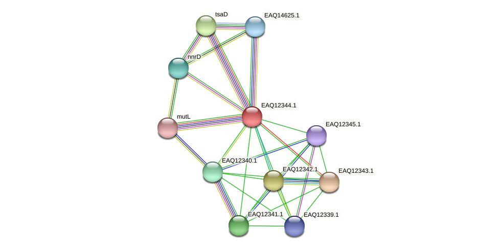 RB2654_13700 protein (Maritimibacter alkaliphilus) - STRING interaction network