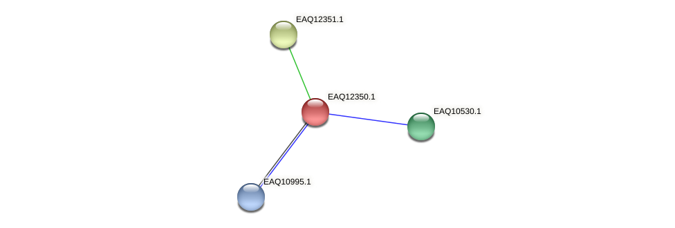 RB2654_13730 protein (Maritimibacter alkaliphilus) - STRING interaction network