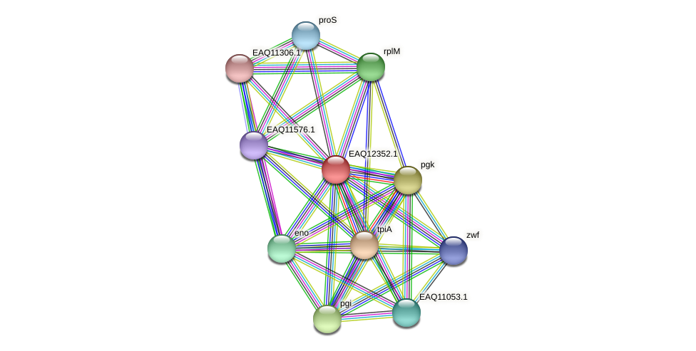 RB2654_13740 protein (Maritimibacter alkaliphilus) - STRING interaction network