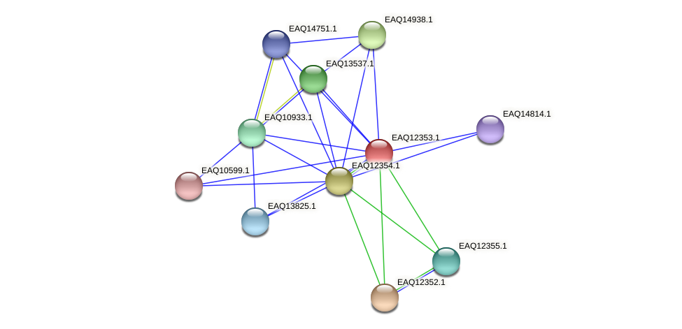 RB2654_13745 protein (Maritimibacter alkaliphilus) - STRING interaction network