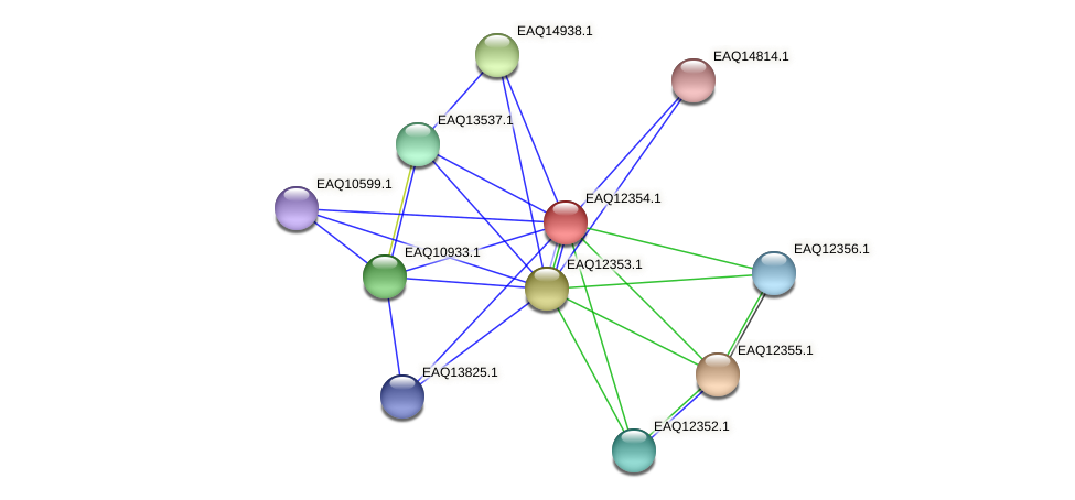 RB2654_13750 protein (Maritimibacter alkaliphilus) - STRING interaction network