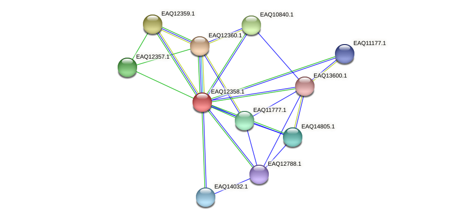RB2654_13770 protein (Maritimibacter alkaliphilus) - STRING interaction network