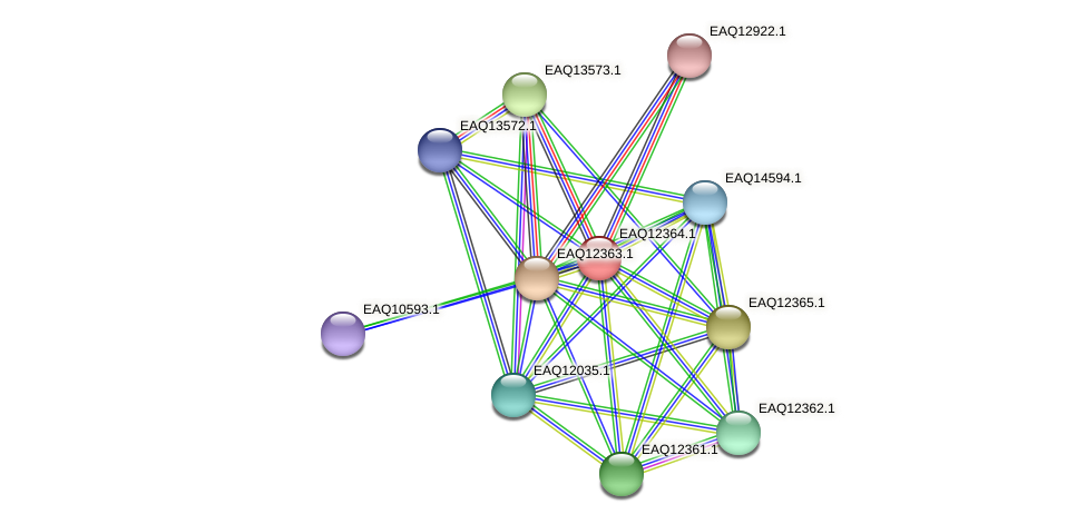 RB2654_13800 protein (Maritimibacter alkaliphilus) - STRING interaction network