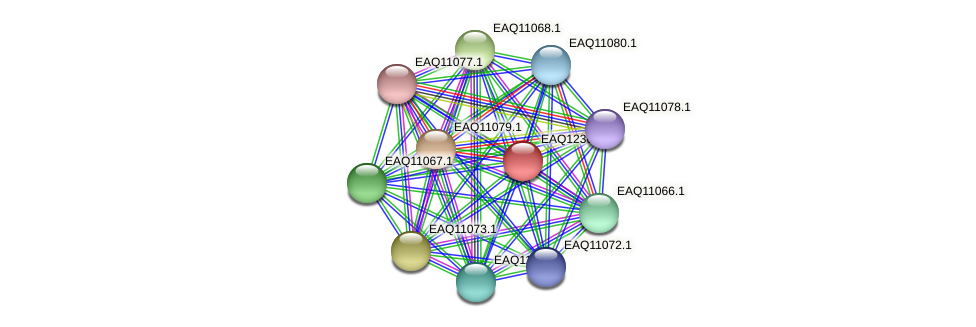 RB2654_13820 protein (Maritimibacter alkaliphilus) - STRING interaction network