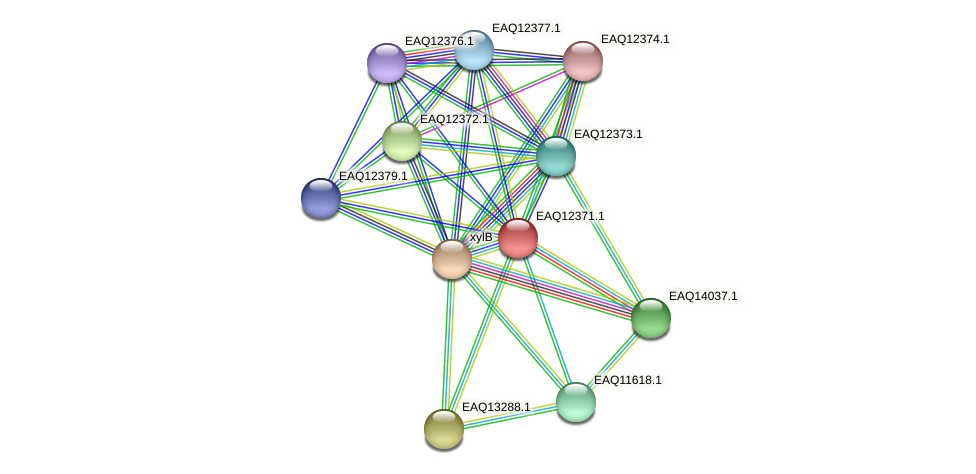 RB2654_13835 protein (Maritimibacter alkaliphilus) - STRING interaction network