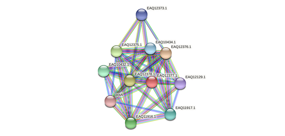 RB2654_13865 protein (Maritimibacter alkaliphilus) - STRING interaction network