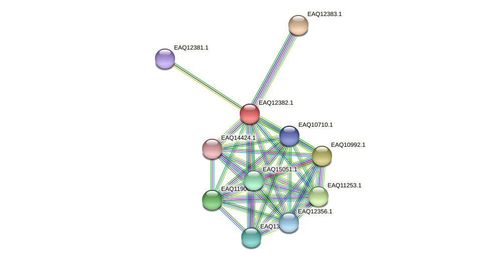 RB2654_13890 protein (Maritimibacter alkaliphilus) - STRING interaction network