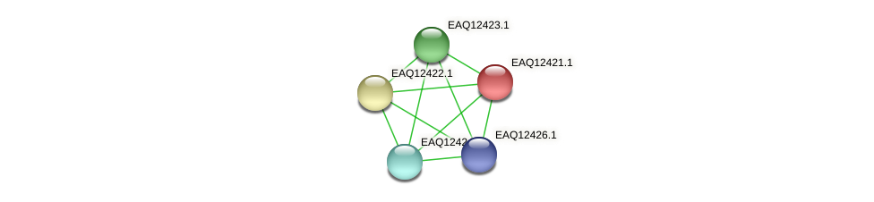 RB2654_14085 protein (Maritimibacter alkaliphilus) - STRING interaction network