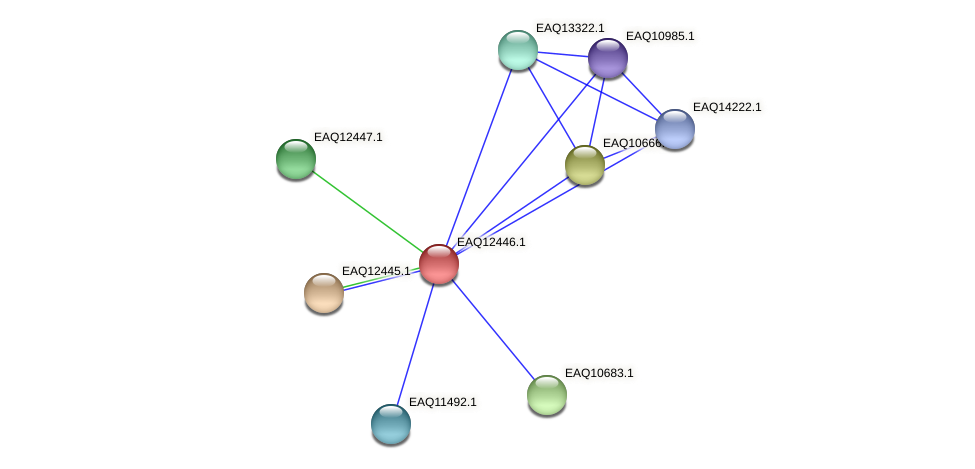 RB2654_14210 protein (Maritimibacter alkaliphilus) - STRING interaction network