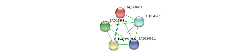 RB2654_14290 protein (Maritimibacter alkaliphilus) - STRING interaction network
