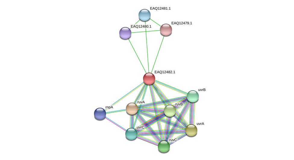 RB2654_14390 protein (Maritimibacter alkaliphilus) - STRING interaction network