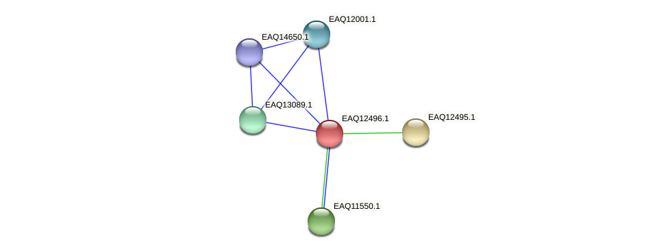 RB2654_14460 protein (Maritimibacter alkaliphilus) - STRING interaction network