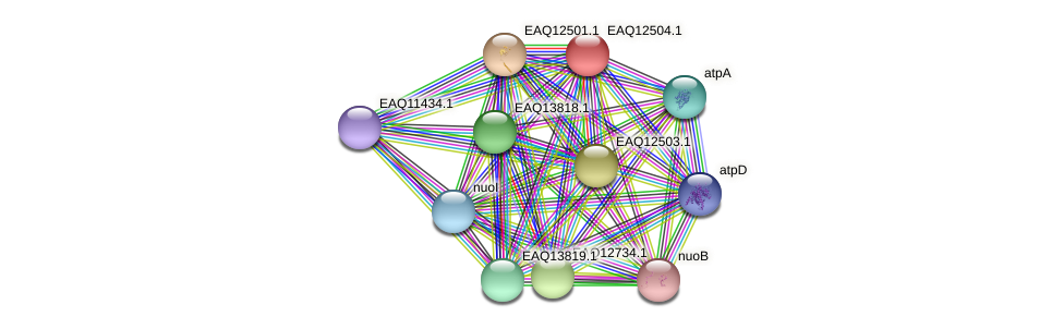 RB2654_14500 protein (Maritimibacter alkaliphilus) - STRING interaction network