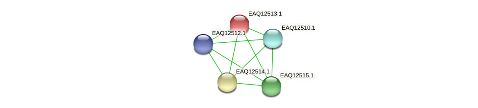 RB2654_14545 protein (Maritimibacter alkaliphilus) - STRING interaction network