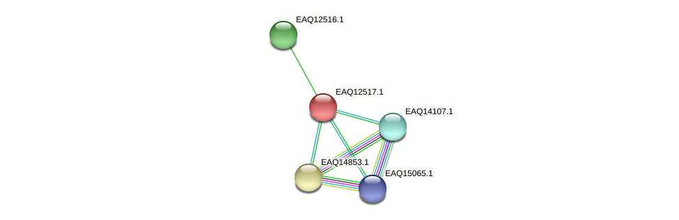 RB2654_14565 protein (Maritimibacter alkaliphilus) - STRING interaction network