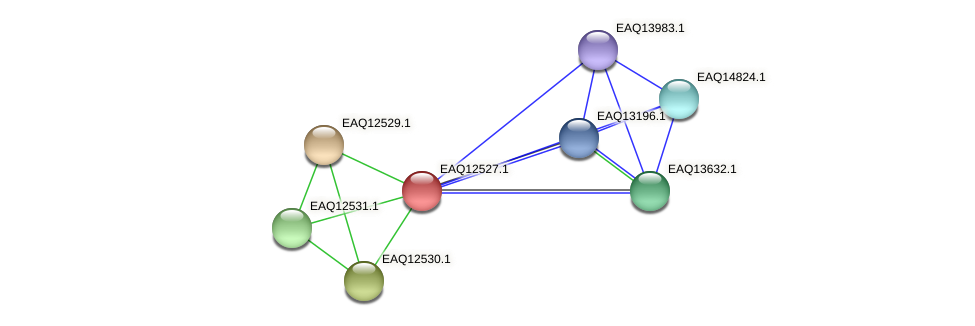 RB2654_14615 protein (Maritimibacter alkaliphilus) - STRING interaction network