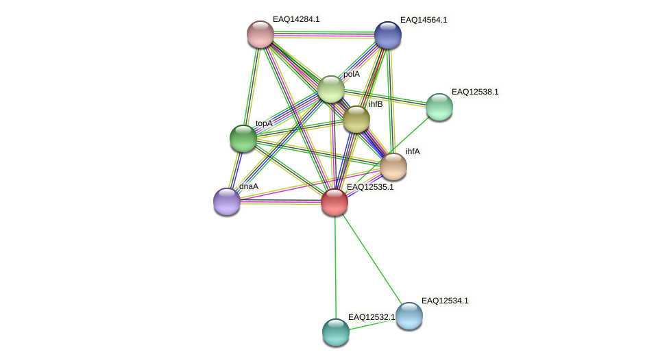RB2654_14655 protein (Maritimibacter alkaliphilus) - STRING interaction network