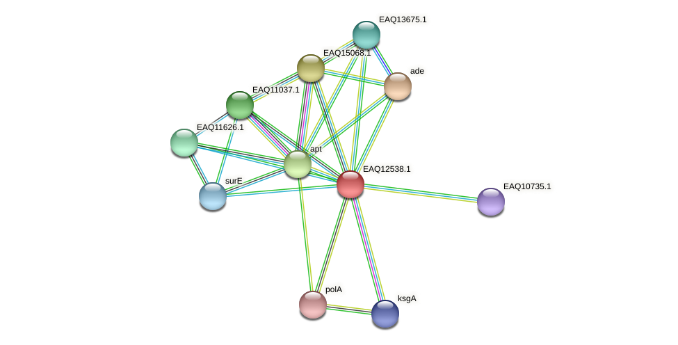 RB2654_14670 protein (Maritimibacter alkaliphilus) - STRING interaction network