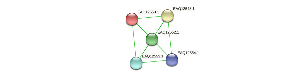 RB2654_14730 protein (Maritimibacter alkaliphilus) - STRING interaction network