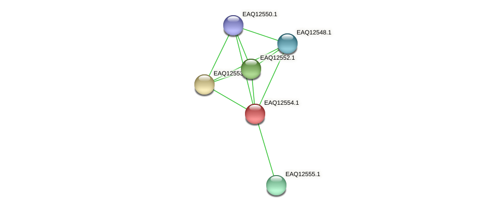 RB2654_14750 protein (Maritimibacter alkaliphilus) - STRING interaction network