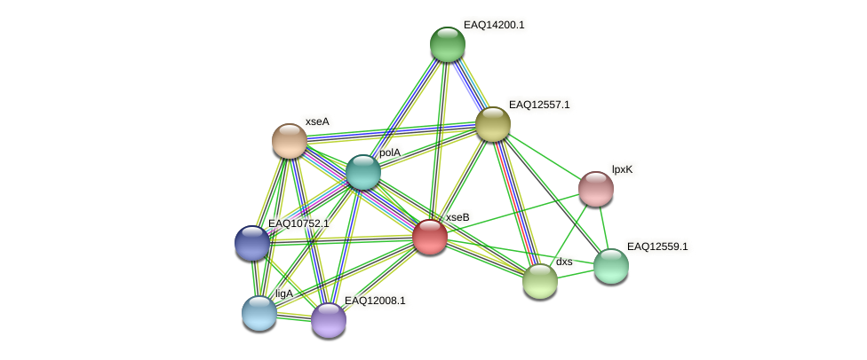 xseB protein (Maritimibacter alkaliphilus) - STRING interaction network