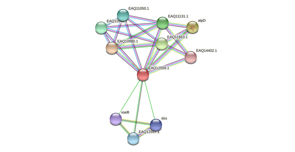 RB2654_14775 protein (Maritimibacter alkaliphilus) - STRING interaction network