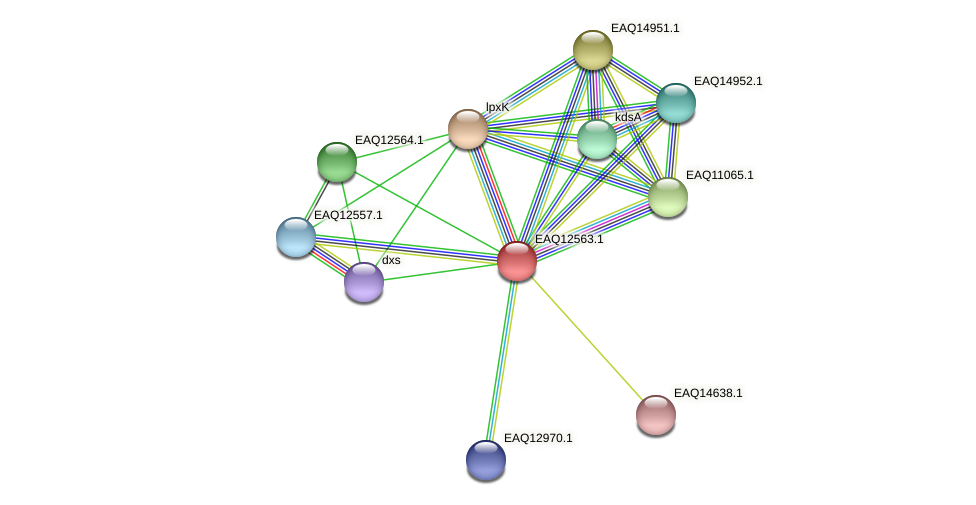 RB2654_14795 protein (Maritimibacter alkaliphilus) - STRING interaction network