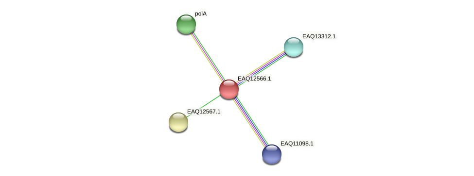 RB2654_14810 protein (Maritimibacter alkaliphilus) - STRING interaction network