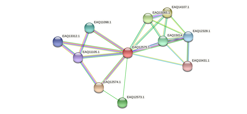 RB2654_14855 protein (Maritimibacter alkaliphilus) - STRING interaction network