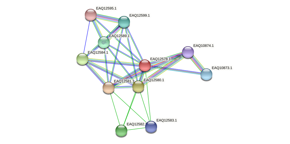 RB2654_14870 protein (Maritimibacter alkaliphilus) - STRING interaction network