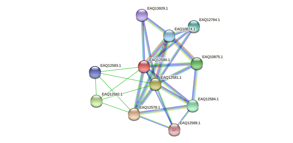 RB2654_14880 protein (Maritimibacter alkaliphilus) - STRING interaction network