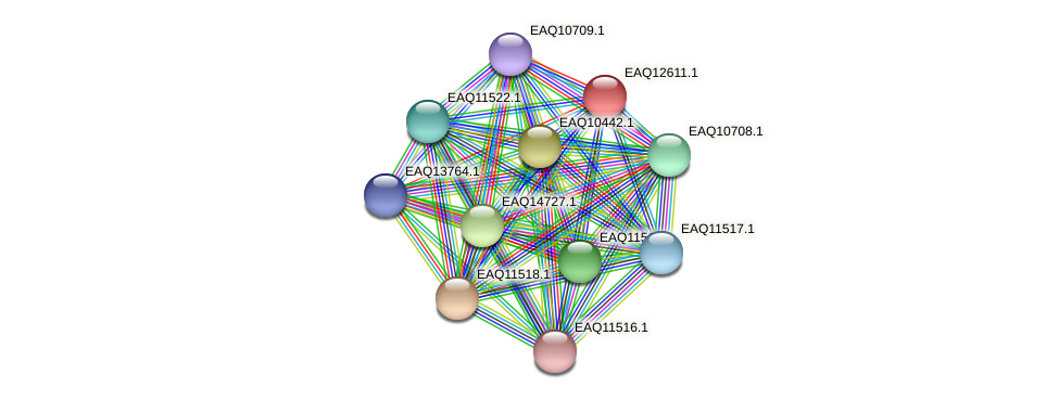 RB2654_15035 protein (Maritimibacter alkaliphilus) - STRING interaction network