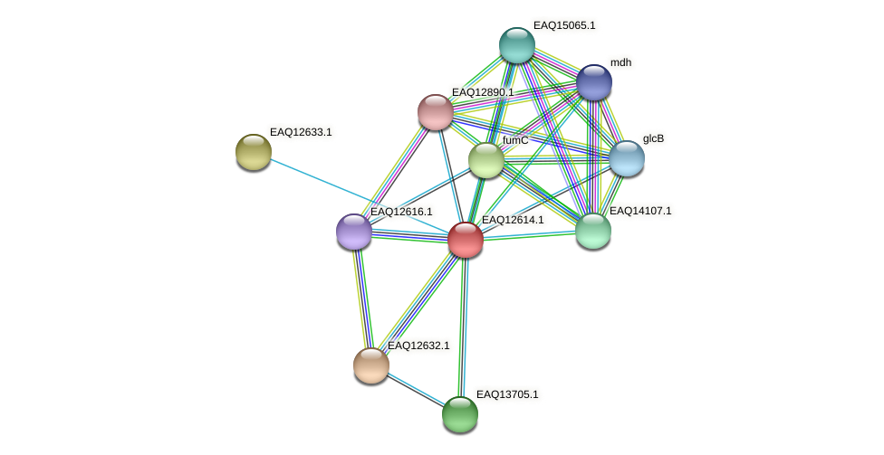 RB2654_15050 protein (Maritimibacter alkaliphilus) - STRING interaction network