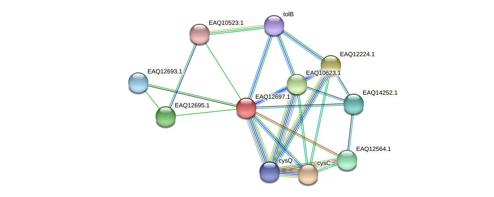 RB2654_15465 protein (Maritimibacter alkaliphilus) - STRING interaction network