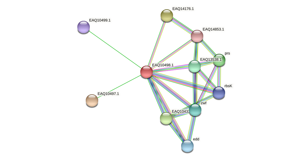 RB2654_15484 protein (Maritimibacter alkaliphilus) - STRING interaction network