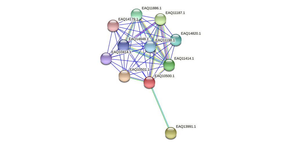 RB2654_15494 protein (Maritimibacter alkaliphilus) - STRING interaction network