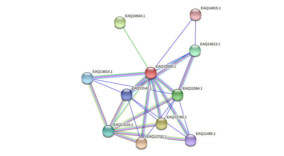 RB2654_15519 protein (Maritimibacter alkaliphilus) - STRING interaction network