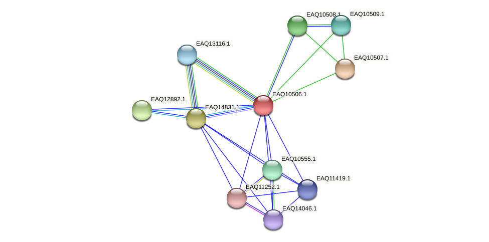 RB2654_15524 protein (Maritimibacter alkaliphilus) - STRING interaction network
