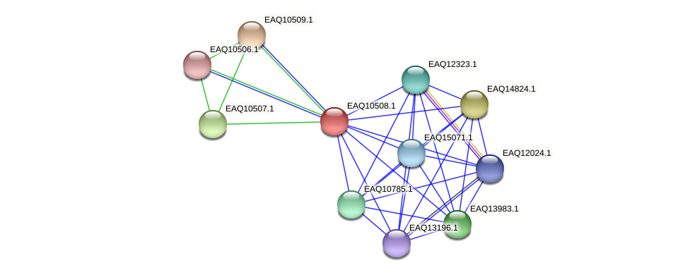 RB2654_15534 protein (Maritimibacter alkaliphilus) - STRING interaction network