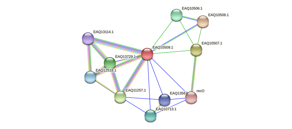 RB2654_15539 protein (Maritimibacter alkaliphilus) - STRING interaction network