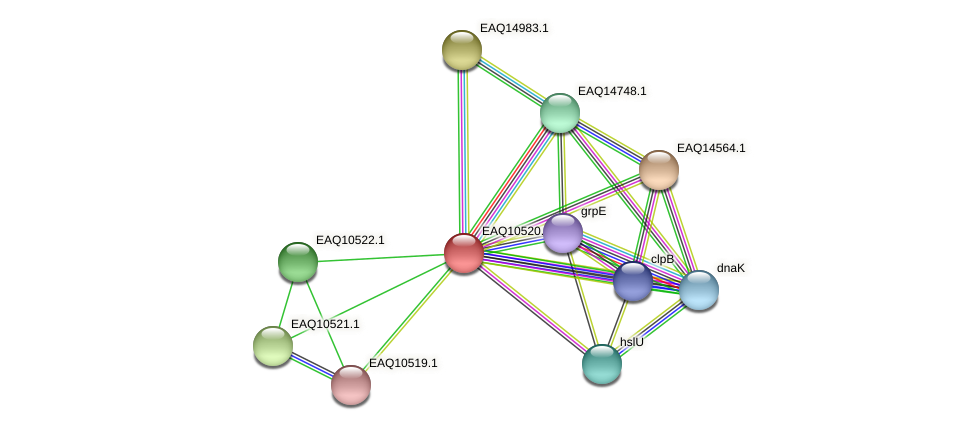 RB2654_15594 protein (Maritimibacter alkaliphilus) - STRING interaction network